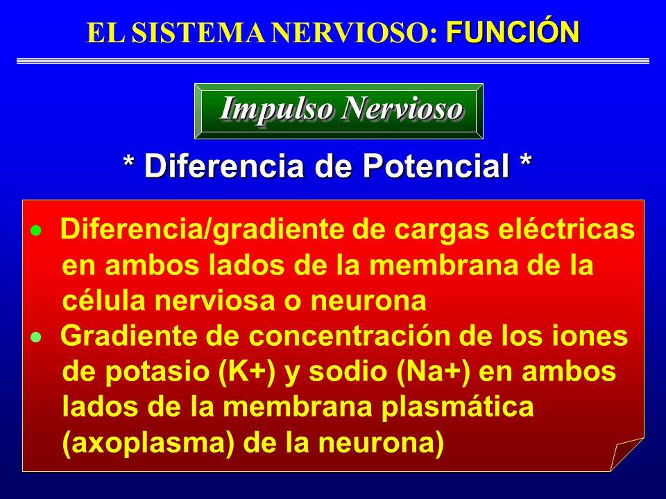 FUNCIÓN EL SISTEMA NERVIOSO: FUNCIÓN * Diferencia de Potencial * Impulso Nervioso Diferencia/gradiente de cargas eléctricas en ambos lados de la membr