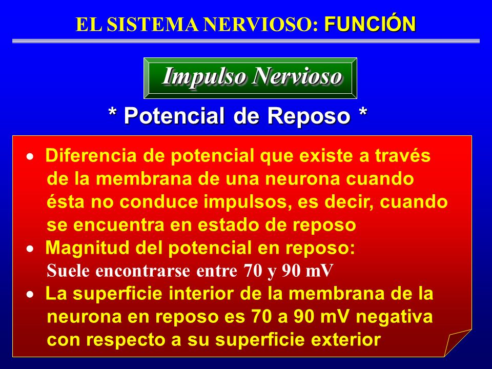 FUNCIÓN EL SISTEMA NERVIOSO: FUNCIÓN * Potencial de Reposo * Impulso Nervioso Diferencia de potencial que existe a través de la membrana de una neuron