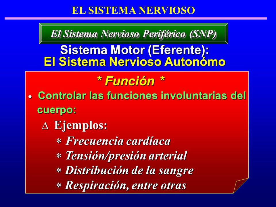 Controlar las funciones involuntarias del Controlar las funciones involuntarias del cuerpo: cuerpo: Ejemplos: Ejemplos: Frecuencia cardíaca Frecuencia
