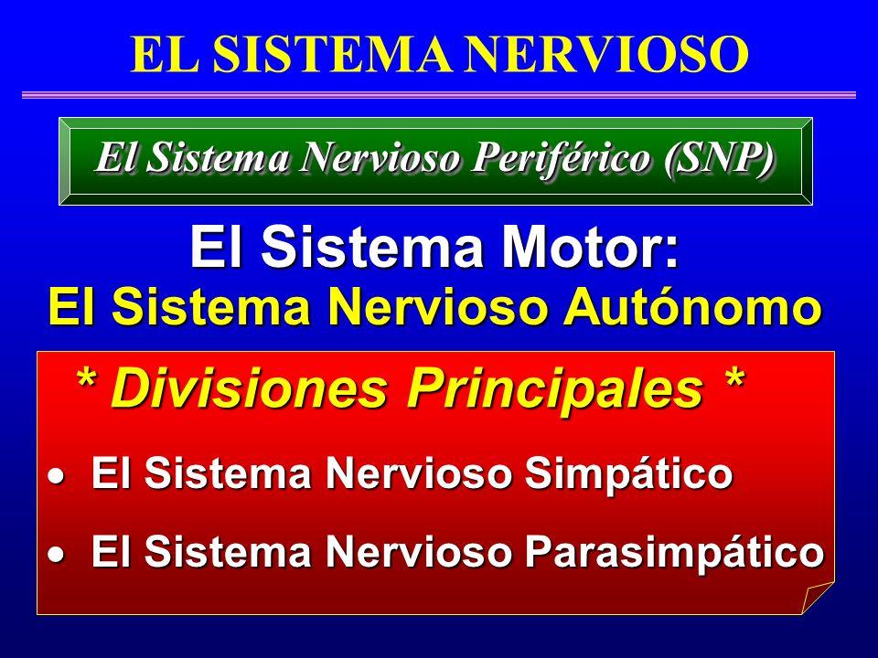 EL SISTEMA NERVIOSO El Sistema Motor: El Sistema Motor: EI Sistema Nervioso Autónomo EI Sistema Nervioso Autónomo El Sistema Nervioso Periférico (SNP)