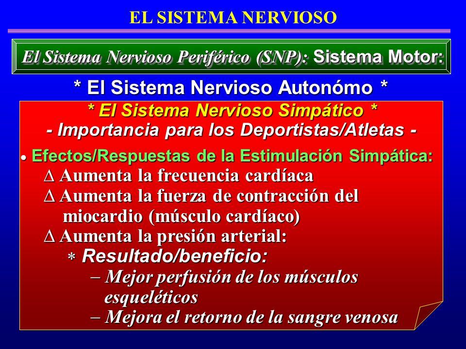 Efectos/Respuestas de la Estimulación Simpática: Efectos/Respuestas de la Estimulación Simpática: Aumenta la frecuencia cardíaca Aumenta la frecuencia