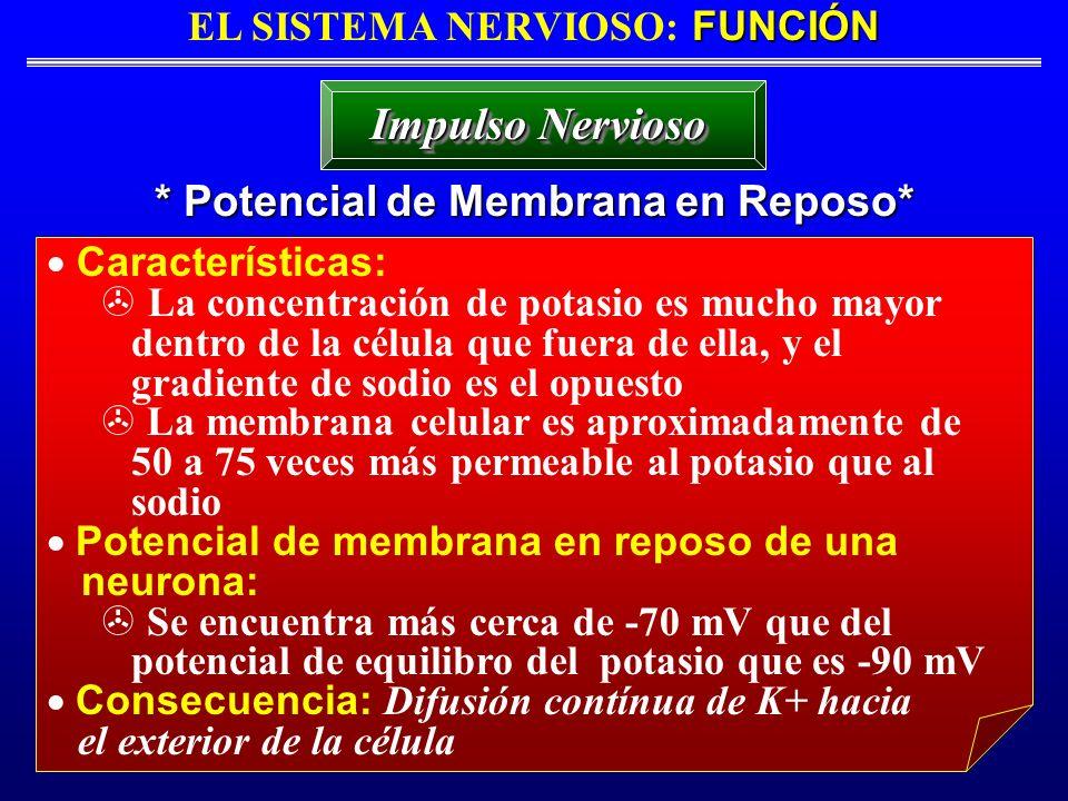 FUNCIÓN EL SISTEMA NERVIOSO: FUNCIÓN * Potencial de Membrana en Reposo* Impulso Nervioso Características: La concentración de potasio es mucho mayor d