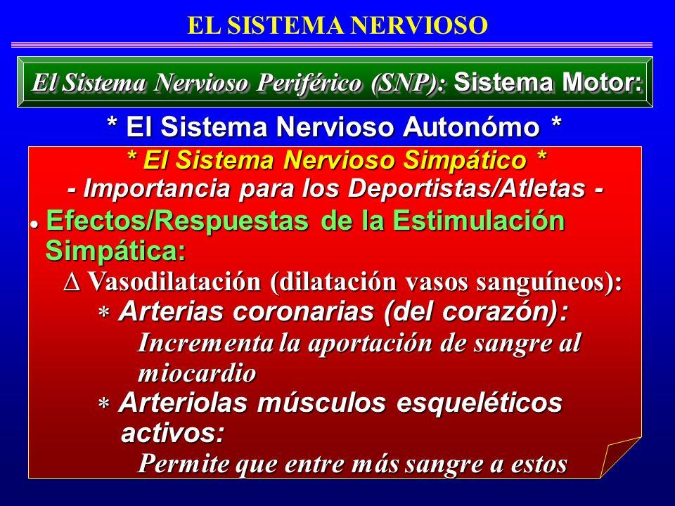 Efectos/Respuestas de la Estimulación Efectos/Respuestas de la Estimulación Simpática: Simpática: Vasodilatación (dilatación vasos sanguíneos): Vasodi
