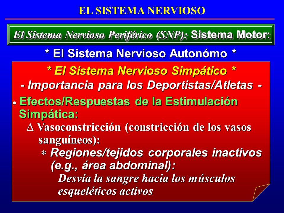 Efectos/Respuestas de la Estimulación Efectos/Respuestas de la Estimulación Simpática: Simpática: Vasoconstricción (constricción de los vasos Vasocons