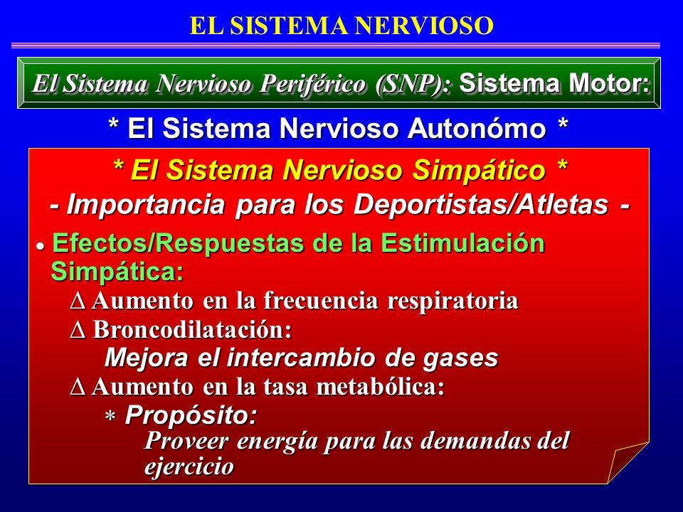 Efectos/Respuestas de la Estimulación Efectos/Respuestas de la Estimulación Simpática: Simpática: Aumento en la frecuencia respiratoria Aumento en la