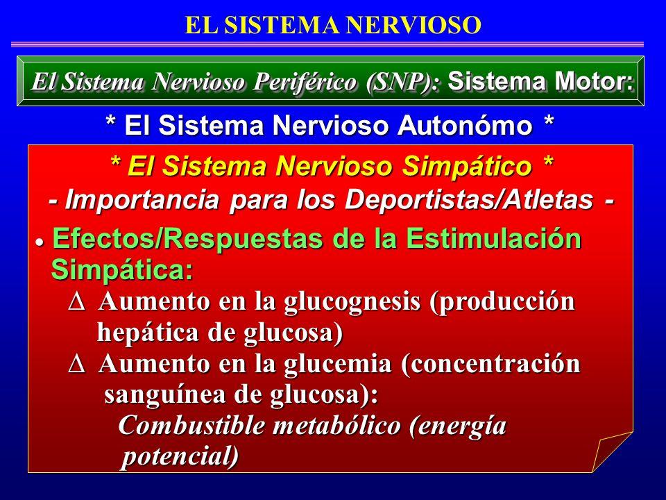 Efectos/Respuestas de la Estimulación Efectos/Respuestas de la Estimulación Simpática: Simpática: Aumento en la glucognesis (producción Aumento en la