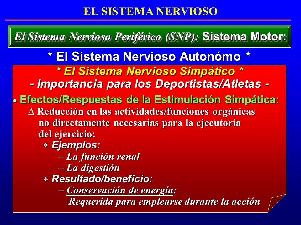 Efectos/Respuestas de la Estimulación Simpática: Efectos/Respuestas de la Estimulación Simpática: Reducción en las actividades/funciones orgánicas Red