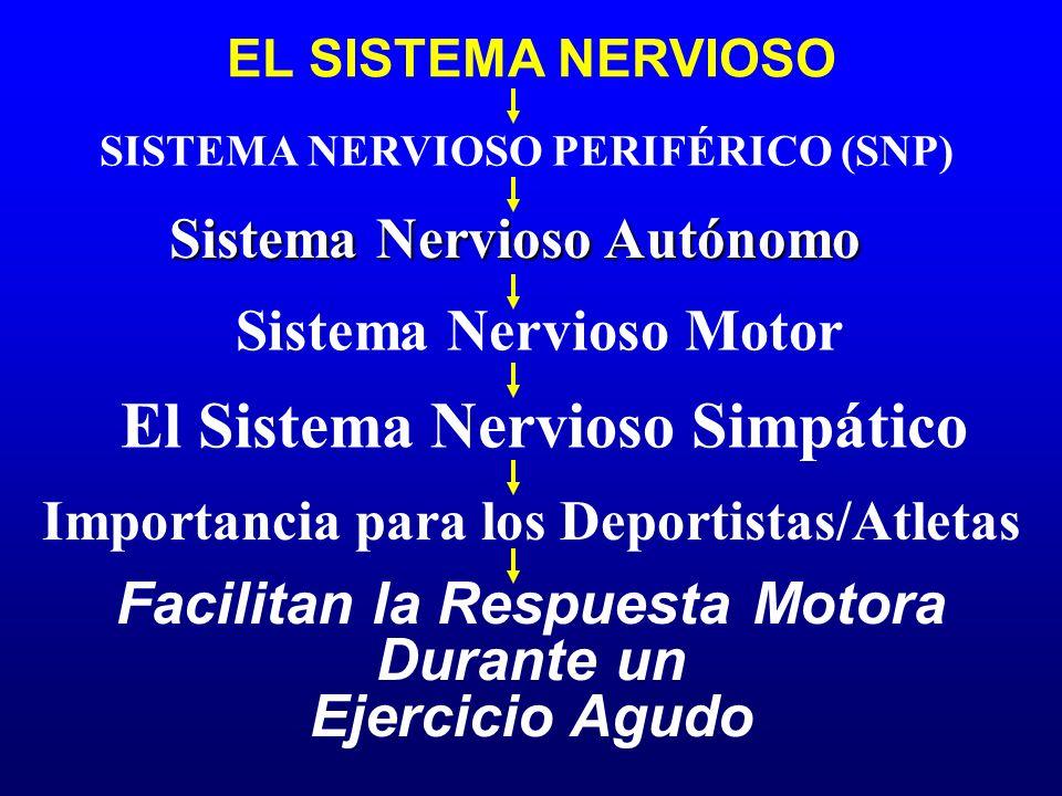 EL SISTEMA NERVIOSO Sistema Nervioso Autónomo SISTEMA NERVIOSO PERIFÉRICO (SNP) Sistema Nervioso Motor El Sistema Nervioso Simpático Facilitan la Resp
