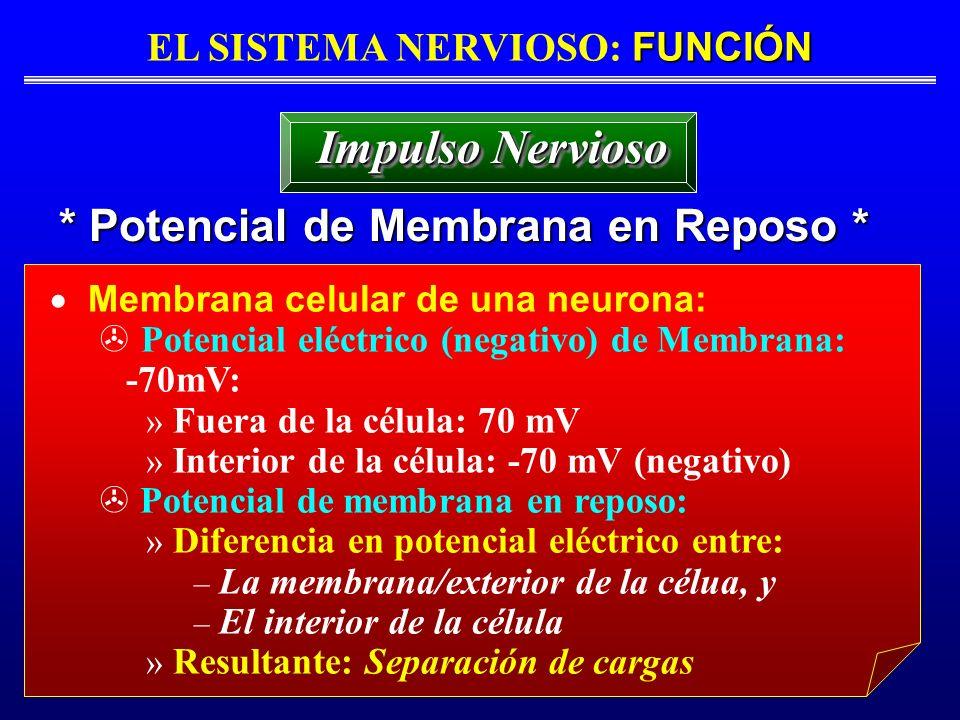 FUNCIÓN EL SISTEMA NERVIOSO: FUNCIÓN * Potencial de Membrana en Reposo * Impulso Nervioso Membrana celular de una neurona: Potencial eléctrico (negati