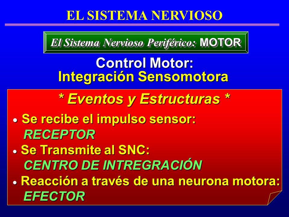 Se recibe el impulso sensor: Se recibe el impulso sensor: RECEPTOR RECEPTOR Se Transmite al SNC: Se Transmite al SNC: CENTRO DE INTREGRACIÓN CENTRO DE