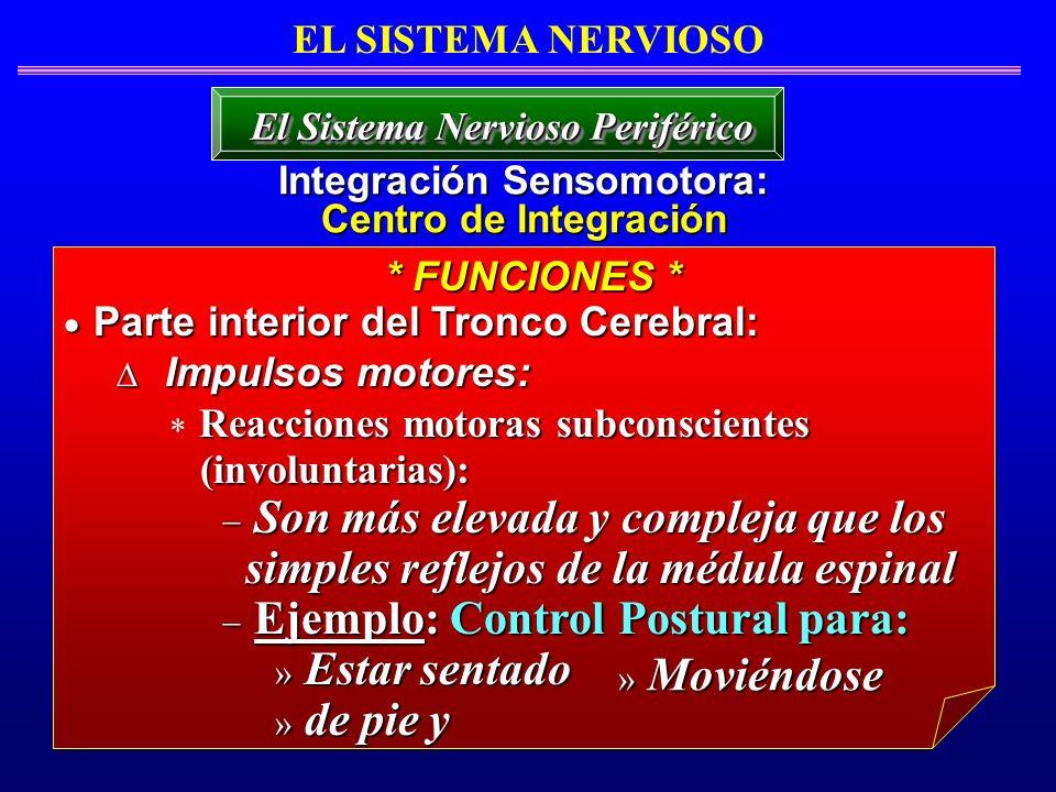 EL SISTEMA NERVIOSO Integración Sensomotora: Centro de Integración El Sistema Nervioso Periférico Parte interior del Tronco Cerebral: Parte interior d