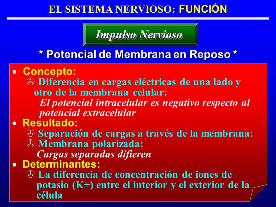FUNCIÓN EL SISTEMA NERVIOSO: FUNCIÓN * Potencial de Membrana en Reposo * Impulso Nervioso Concepto: Diferencia en cargas eléctricas de una lado y otro