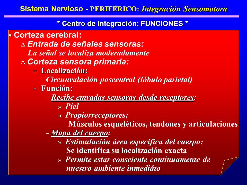 Integración Sensomotora Sistema Nervioso - PERIFÉRICO : Integración Sensomotora * Centro de Integración: FUNCIONES * Corteza cerebral: Entrada de seña