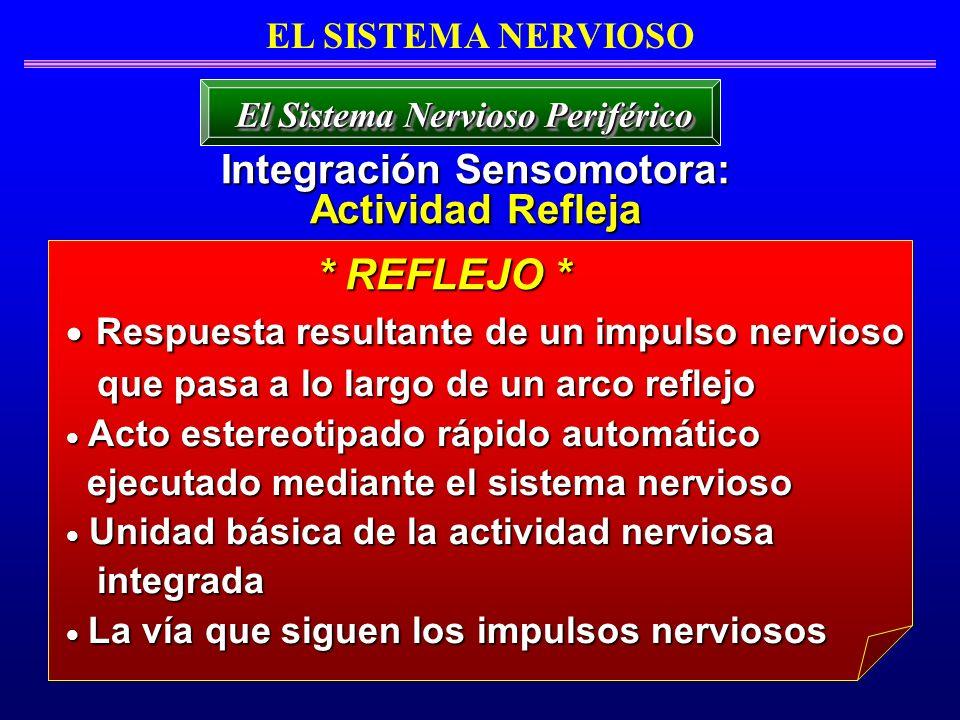 EL SISTEMA NERVIOSO Integración Sensomotora: Actividad Refleja El Sistema Nervioso Periférico Respuesta resultante de un impulso nervioso Respuesta re