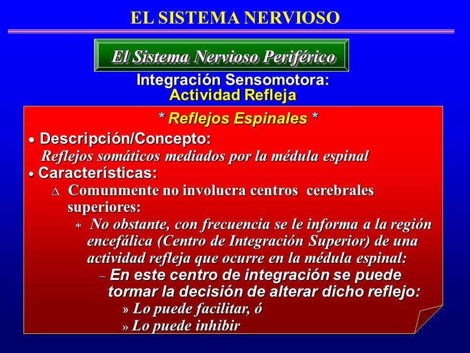 EL SISTEMA NERVIOSO Integración Sensomotora: Actividad Refleja El Sistema Nervioso Periférico * Reflejos Espinales * Descripción/Concepto: Descripción
