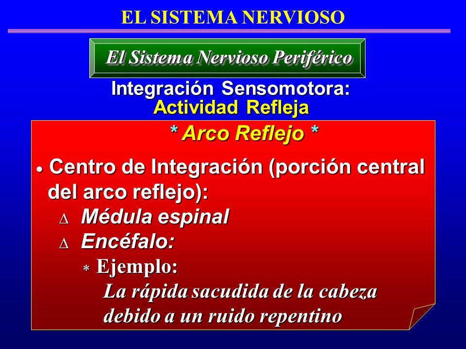 EL SISTEMA NERVIOSO Integración Sensomotora: Actividad Refleja El Sistema Nervioso Periférico Centro de Integración (porción central Centro de Integra