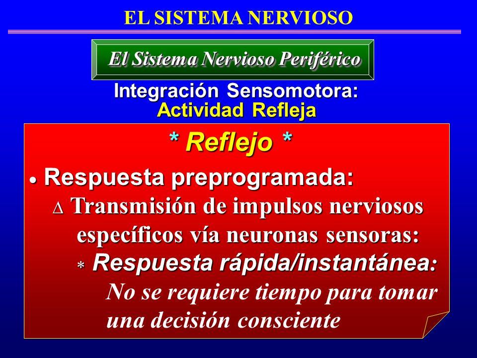 Respuesta preprogramada: Respuesta preprogramada: Transmisión de impulsos nerviosos Transmisión de impulsos nerviosos específicos vía neuronas sensora
