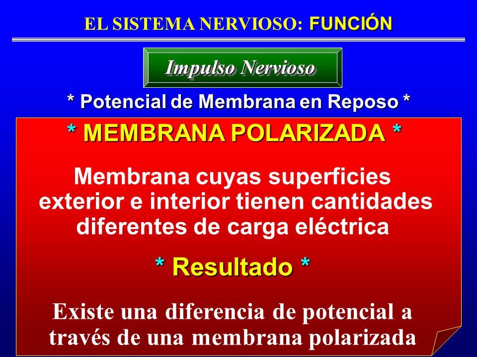 FUNCIÓN EL SISTEMA NERVIOSO: FUNCIÓN * Potencial de Membrana en Reposo * Impulso Nervioso * MEMBRANA POLARIZADA * * MEMBRANA POLARIZADA * Membrana cuy