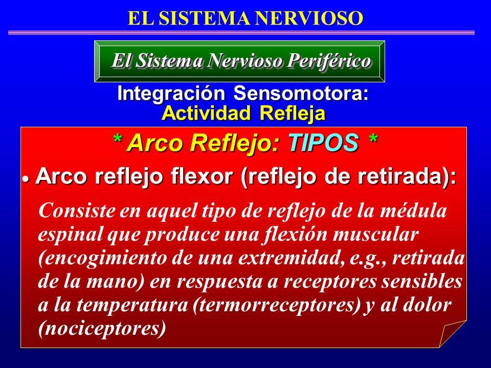 * Arco Reflejo: TIPOS * Arco reflejo flexor (reflejo de retirada): Arco reflejo flexor (reflejo de retirada): EL SISTEMA NERVIOSO Integración Sensomot