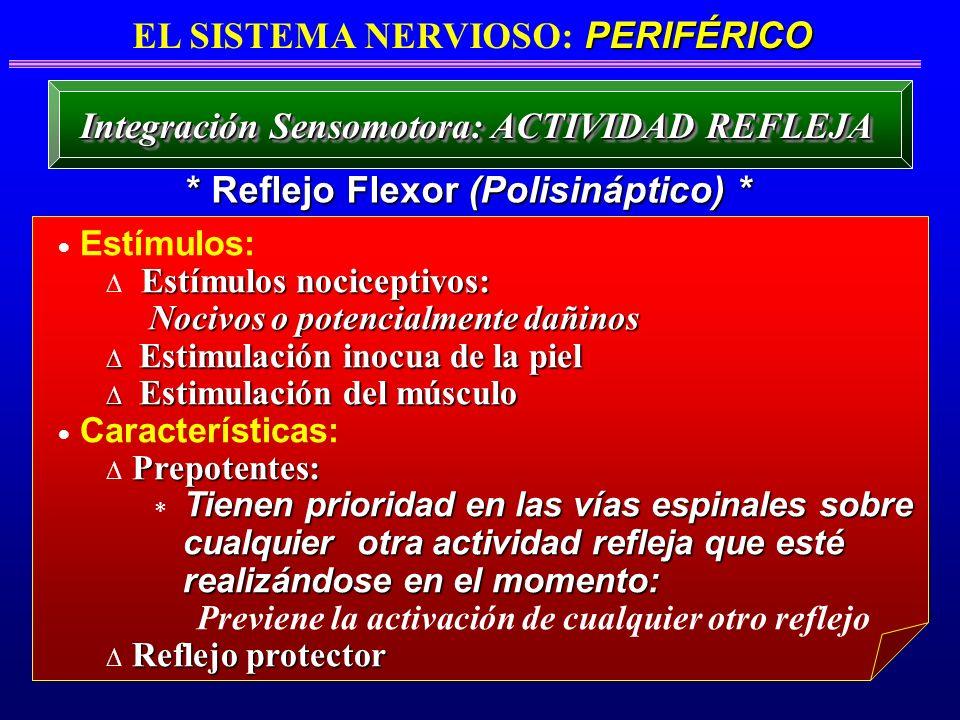 Estímulos: Estímulos nociceptivos: Nocivos o potencialmente dañinos Nocivos o potencialmente dañinos Estimulación inocua de la piel Estimulación inocu