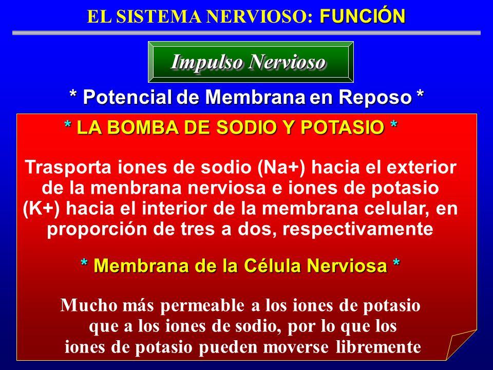 FUNCIÓN EL SISTEMA NERVIOSO: FUNCIÓN * Potencial de Membrana en Reposo * Impulso Nervioso * LA BOMBA DE SODIO Y POTASIO * Trasporta iones de sodio (Na