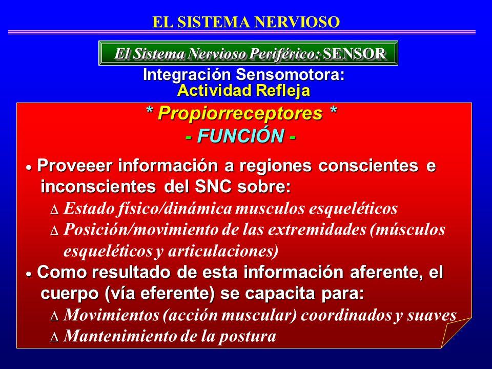 EL SISTEMA NERVIOSO Proveeer información a regiones conscientes e Proveeer información a regiones conscientes e inconscientes del SNC sobre: inconscie