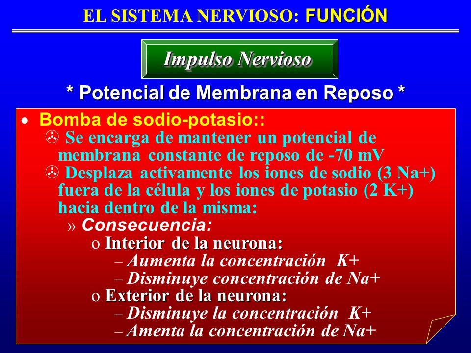 FUNCIÓN EL SISTEMA NERVIOSO: FUNCIÓN * Potencial de Membrana en Reposo * Impulso Nervioso Bomba de sodio-potasio:: Se encarga de mantener un potencial