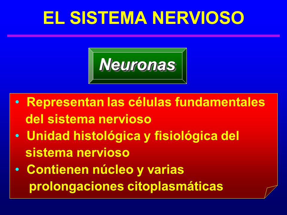 ESTRUCTURA EL SISTEMA NERVIOSO: ESTRUCTURA Neuronas: Regiones - Prolongaciones Celulares Axón o cilindroeje: Estructura delgada y larga que se origina en una región cónica del soma > Representa el transmisor de la neurona > Lleva los impulsos fuera del cuerpo celular > Botones terminales: » Extremo/teminal del axón (fibrillas terminales): – Proyeccciones sinápticas - Albergan: o Vesículas (sacos) - llenos de neurotrnasmisores : Permiten comunicación entre una neurona y otra célula