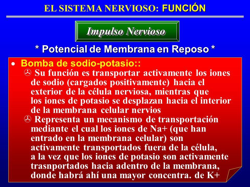 FUNCIÓN EL SISTEMA NERVIOSO: FUNCIÓN * Potencial de Membrana en Reposo * Impulso Nervioso Bomba de sodio-potasio:: Su función es transportar activamen
