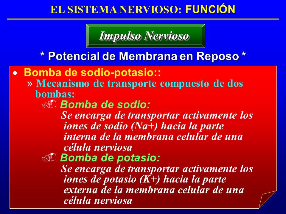 FUNCIÓN EL SISTEMA NERVIOSO: FUNCIÓN * Potencial de Membrana en Reposo * Impulso Nervioso Bomba de sodio-potasio:: » Mecanismo de transporte compuesto