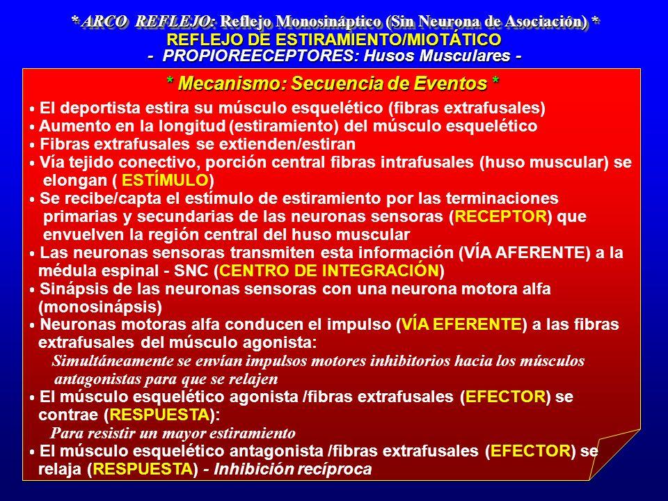 * ARCO REFLEJO: Reflejo Monosináptico (Sin Neurona de Asociación) * REFLEJO DE ESTIRAMIENTO/MIOTÁTICO - PROPIOREECEPTORES: Husos Musculares - El depor