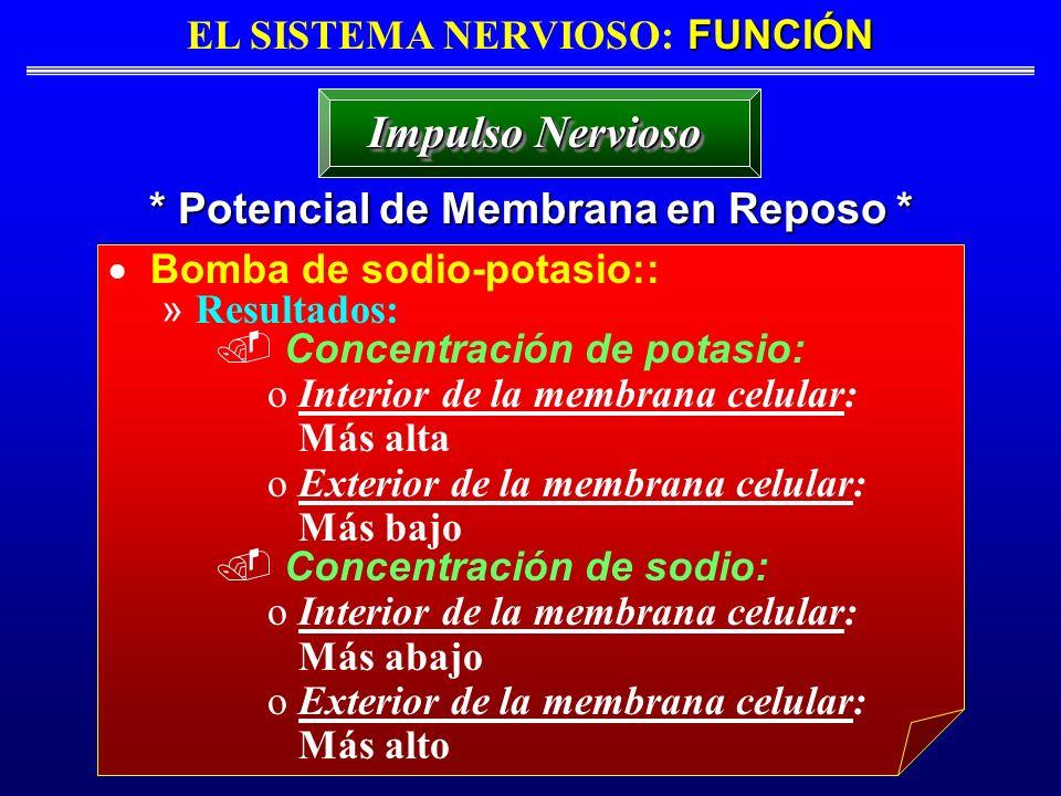 FUNCIÓN EL SISTEMA NERVIOSO: FUNCIÓN * Potencial de Membrana en Reposo * Impulso Nervioso Bomba de sodio-potasio:: » Resultados: Concentración de pota