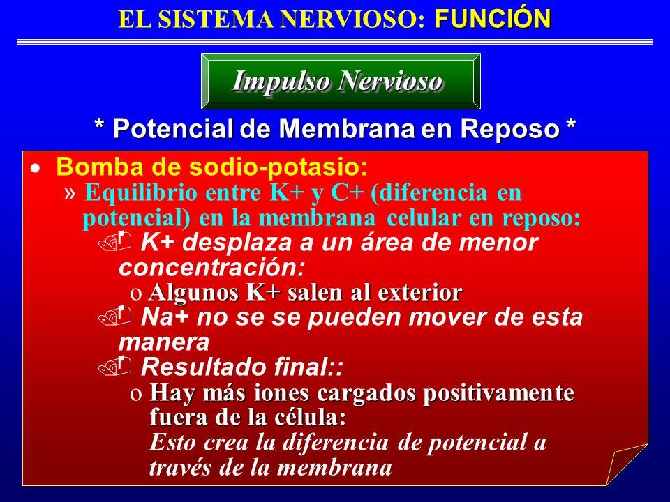 FUNCIÓN EL SISTEMA NERVIOSO: FUNCIÓN * Potencial de Membrana en Reposo * Impulso Nervioso Bomba de sodio-potasio: » Equilibrio entre K+ y C+ (diferenc
