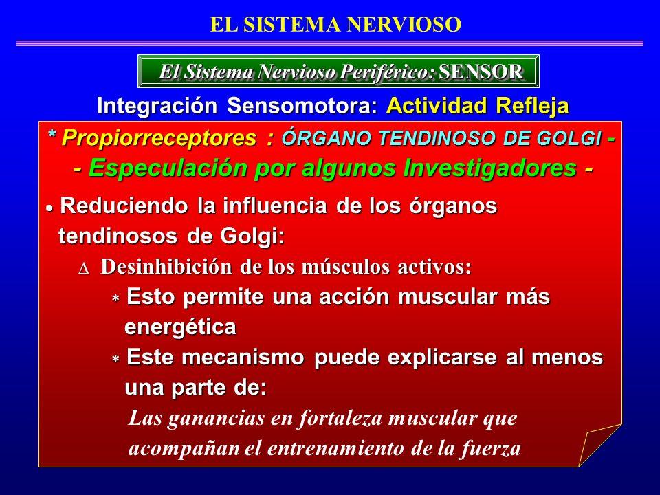Reduciendo la influencia de los órganos Reduciendo la influencia de los órganos tendinosos de Golgi: tendinosos de Golgi: Desinhibición de los músculo