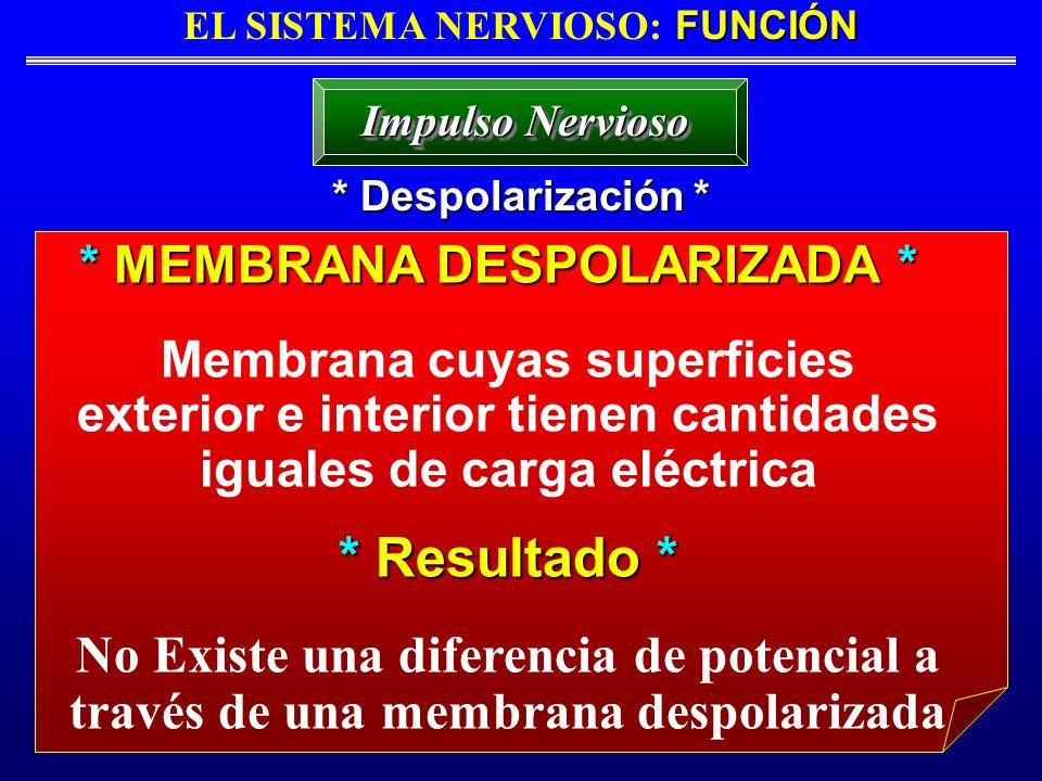 FUNCIÓN EL SISTEMA NERVIOSO: FUNCIÓN * Despolarización * Impulso Nervioso * MEMBRANA DESPOLARIZADA * Membrana cuyas superficies exterior e interior ti