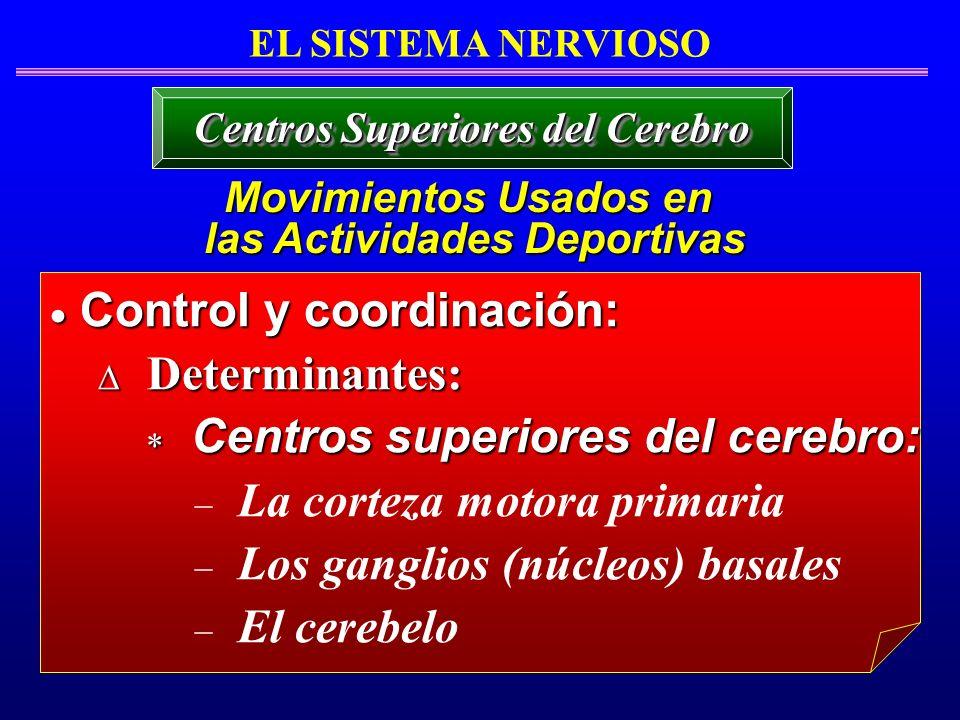 Centros Superiores del Cerebro Movimientos Usados en las Actividades Deportivas las Actividades Deportivas Control y coordinación: Control y coordinac