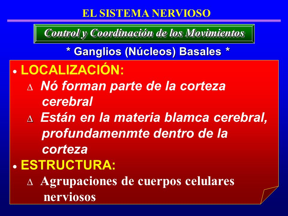 * Ganglios (Núcleos) Basales * EL SISTEMA NERVIOSO LOCALIZACIÓN: Nó forman parte de la corteza cerebral Están en la materia blamca cerebral, profundam