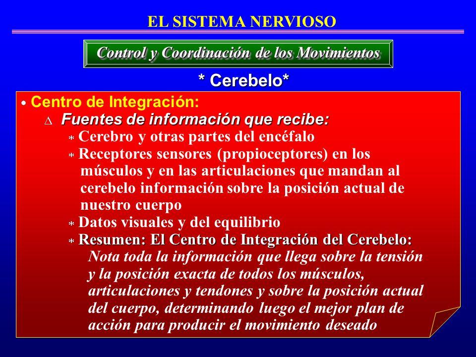 * Cerebelo* EL SISTEMA NERVIOSO Centro de Integración: Fuentes de información que recibe: Cerebro y otras partes del encéfalo Receptores sensores (pro