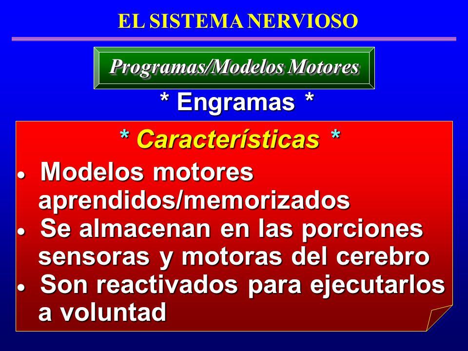Modelos motores Modelos motores aprendidos/memorizados aprendidos/memorizados Se almacenan en las porciones Se almacenan en las porciones sensoras y m