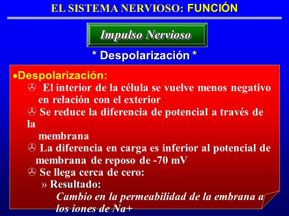 FUNCIÓN EL SISTEMA NERVIOSO: FUNCIÓN * Despolarización * Impulso Nervioso Despolarización: > El interior de la célula se vuelve menos negativo en rela