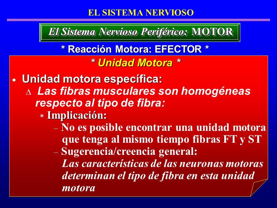 Unidad motora específica: Las fibras musculares son homogéneas respecto al tipo de fibra: Implicación: No es posible encontrar una unidad motora que t