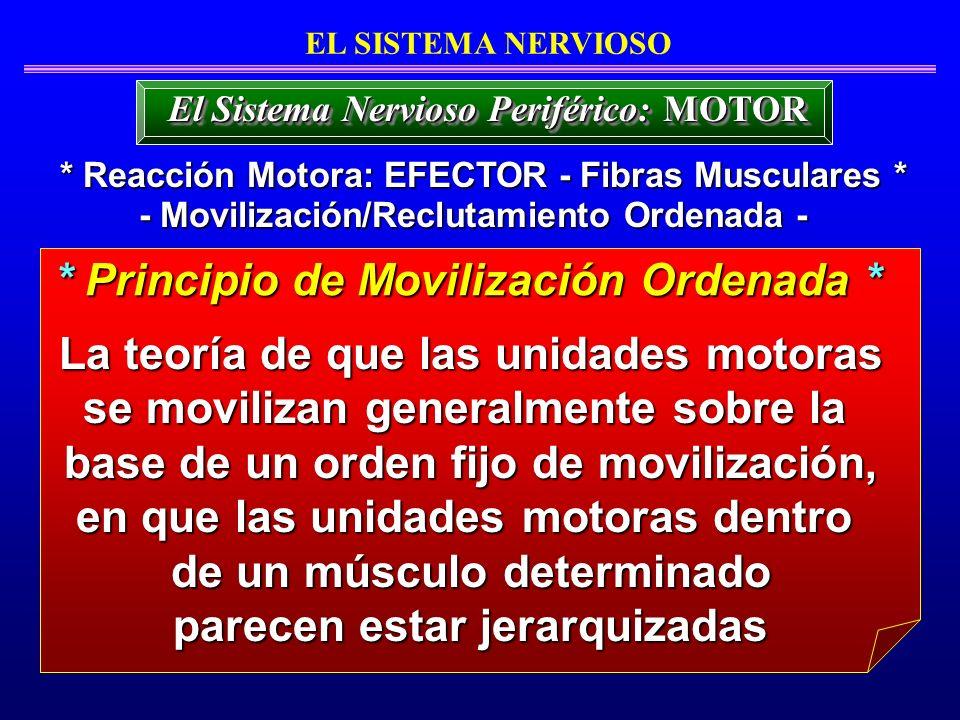 La teoría de que las unidades motoras se movilizan generalmente sobre la La teoría de que las unidades motoras se movilizan generalmente sobre la base