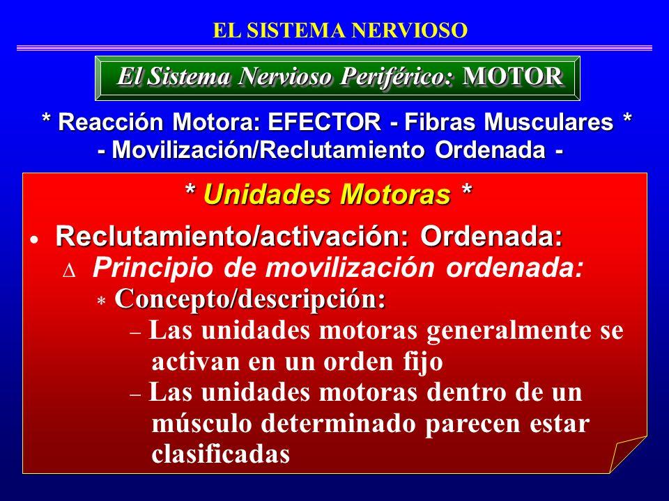 Reclutamiento/activación: Ordenada: Principio de movilización ordenada: Concepto/descripción: Las unidades motoras generalmente se activan en un orden