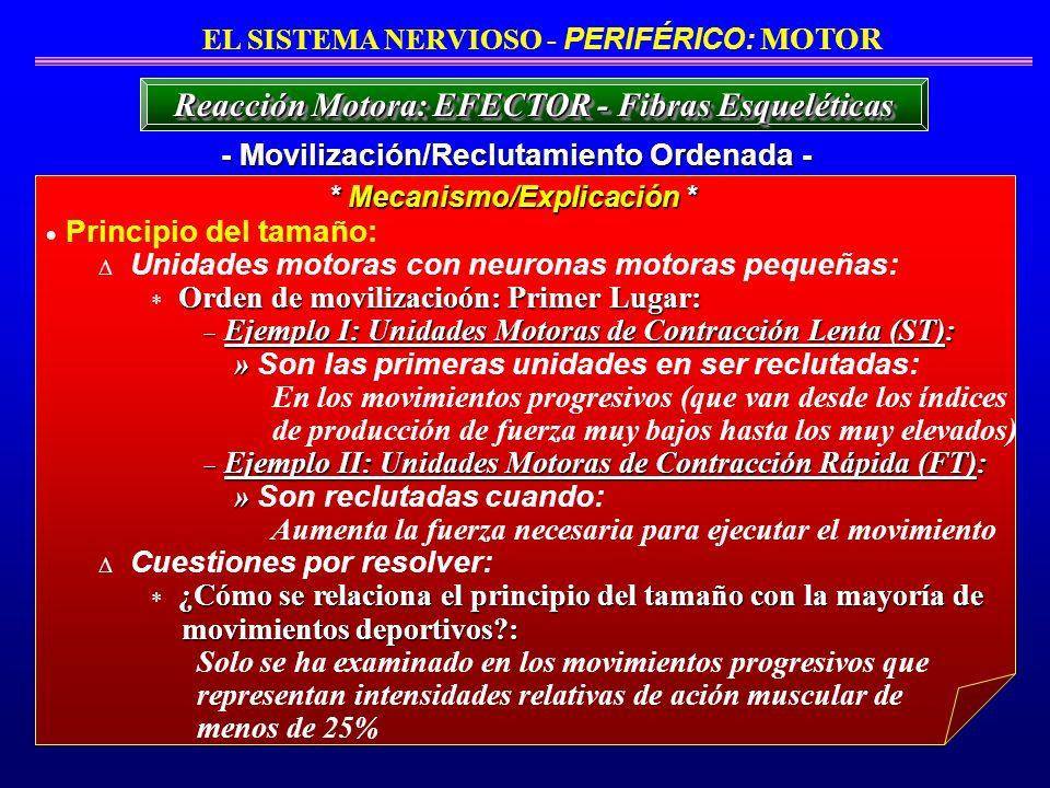 Principio del tamaño: Unidades motoras con neuronas motoras pequeñas: Orden de movilizacioón: Primer Lugar: Ejemplo I: Unidades Motoras de Contracción