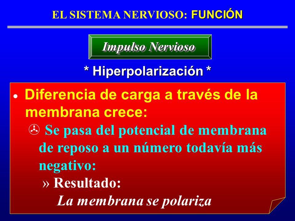 FUNCIÓN EL SISTEMA NERVIOSO: FUNCIÓN * Hiperpolarización * Impulso Nervioso Diferencia de carga a través de la membrana crece: Se pasa del potencial d