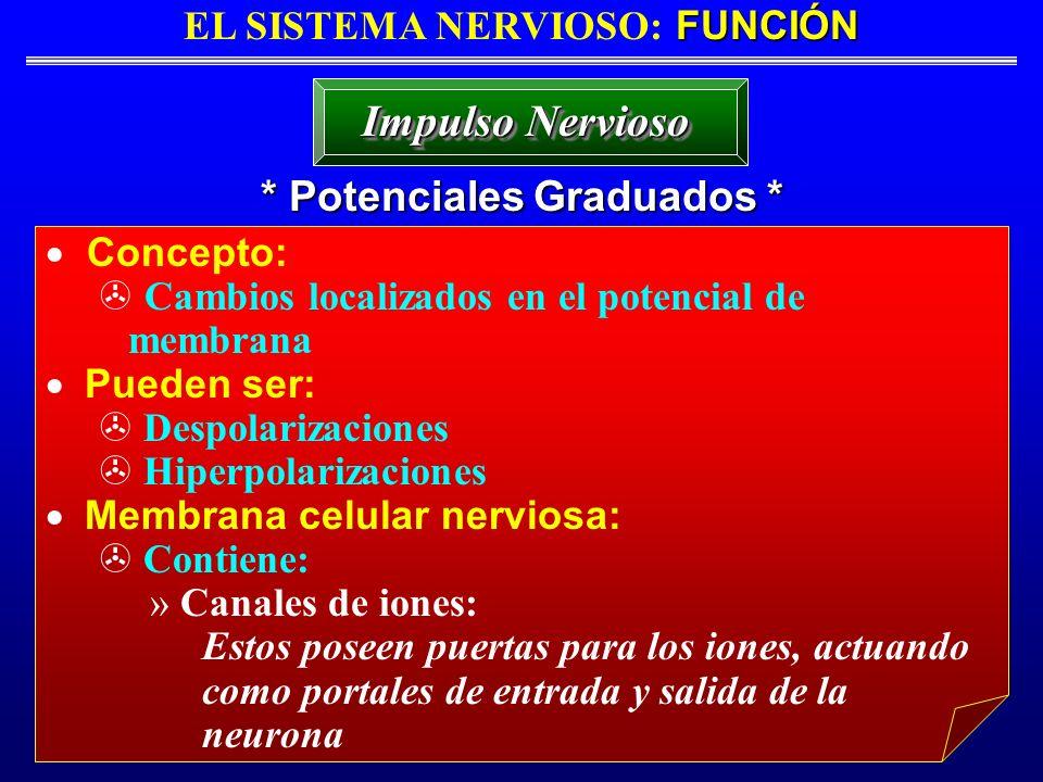 FUNCIÓN EL SISTEMA NERVIOSO: FUNCIÓN * Potenciales Graduados * Impulso Nervioso Concepto: Cambios localizados en el potencial de membrana Pueden ser: