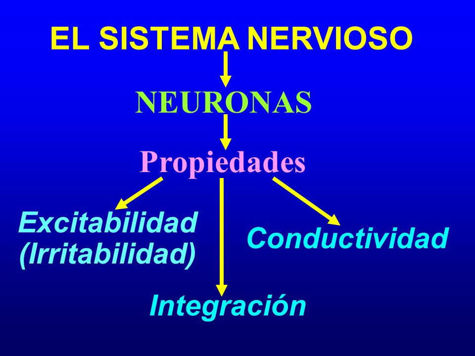 EL SISTEMA NERVIOSO Propiedades Excitabilidad NEURONAS Conductividad Capacidad para Recibir Estímulos una Membrana de la Célula Nerviosa Capacidad de Transmitir un Impulso a otra Neurona o a un Órgano Efector (e.g., Músculos y Glándulas)