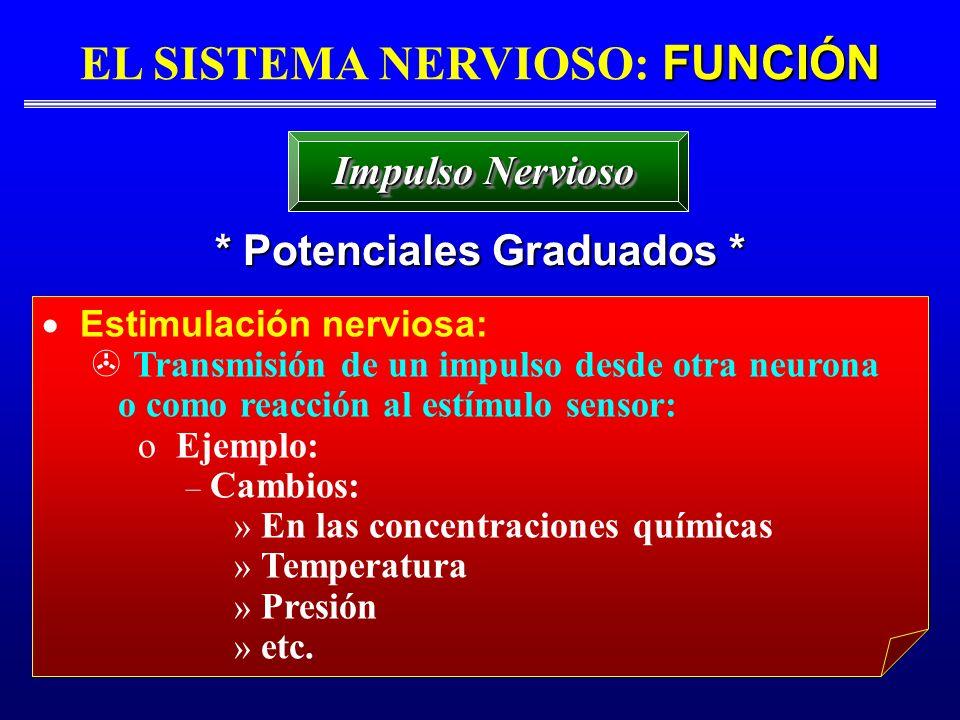 FUNCIÓN EL SISTEMA NERVIOSO: FUNCIÓN * Potenciales Graduados * Impulso Nervioso Estimulación nerviosa: Transmisión de un impulso desde otra neurona o