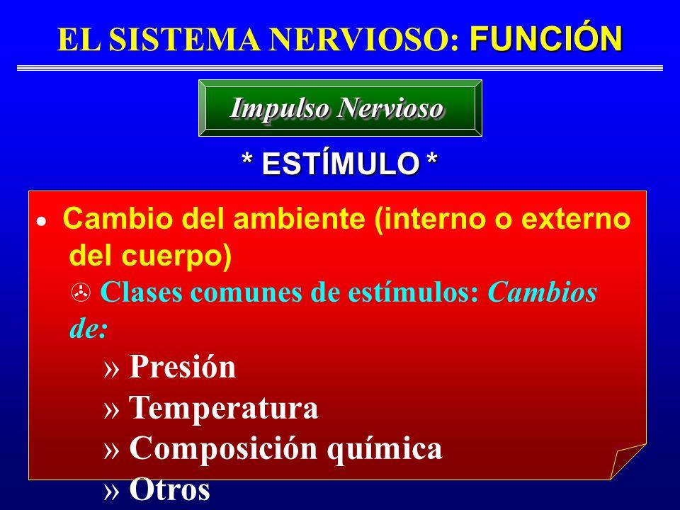 FUNCIÓN EL SISTEMA NERVIOSO: FUNCIÓN * ESTÍMULO * Impulso Nervioso Cambio del ambiente (interno o externo del cuerpo) Clases comunes de estímulos: Cam