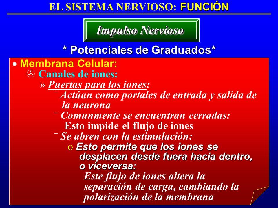 FUNCIÓN EL SISTEMA NERVIOSO: FUNCIÓN * Potenciales de Graduados* Impulso Nervioso Membrana Celular: Canales de iones: » Puertas para los iones: ¯ Actú